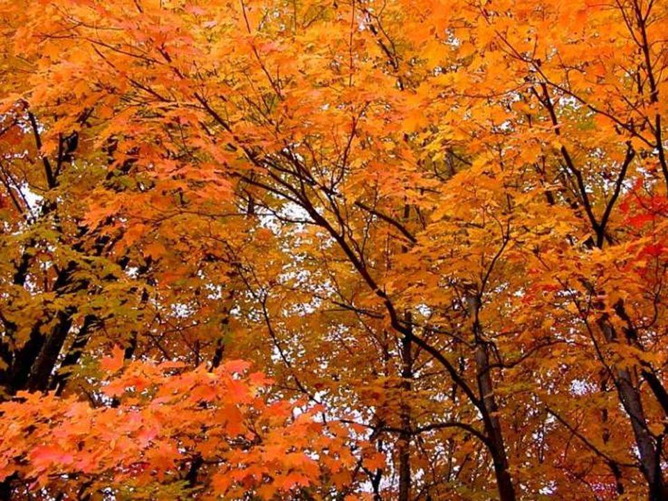 L'automne est une demeure d'or et de pluie. (Jacques Chessez)
