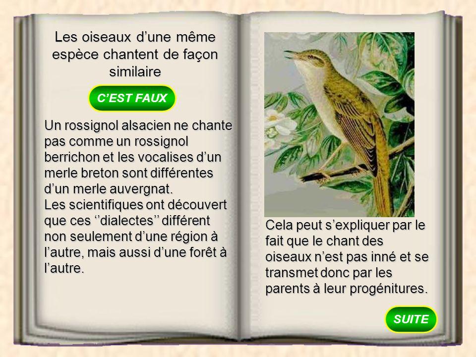 Les oiseaux dune même espèce chantent de façon similaire VRAI FAUX