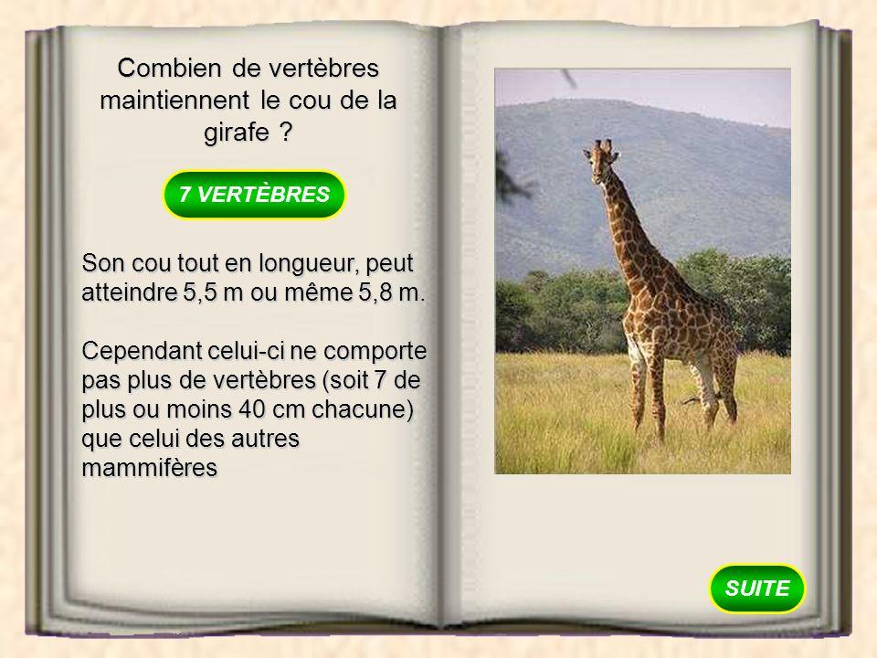 Combien de vertèbres maintiennent le cou de la girafe ? 7 VERTÈBRES 15 VERTÈBRES 30 VERTÈBRES