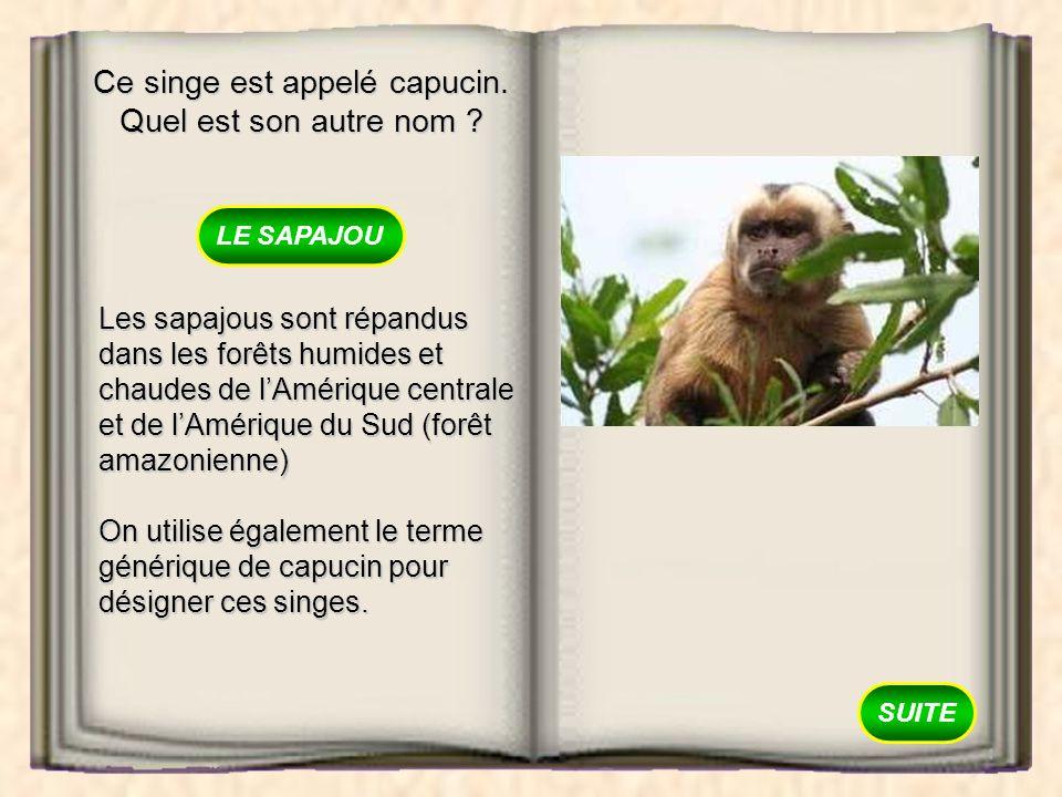 Ce singe est appelé capucin. Quel est son autre nom ? LE MAKI LE SAPAJOU LE MANGABEY