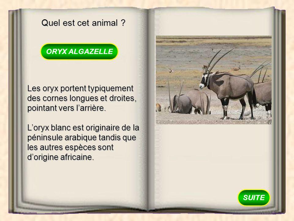 Quel est cet animal ? BONGO ORYX ALGAZELLE GNOU