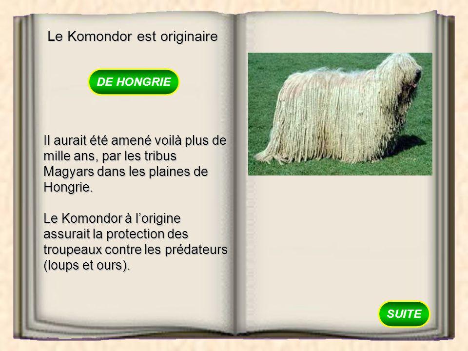 Le Komondor est originaire DIRLANDE DE HONGRIE DAUSTRALIE
