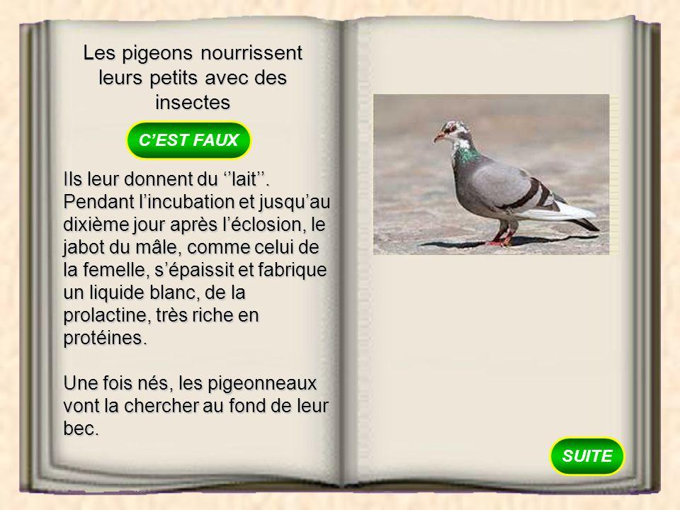 Les pigeons nourrissent leurs petits avec des insectes VRAI FAUX