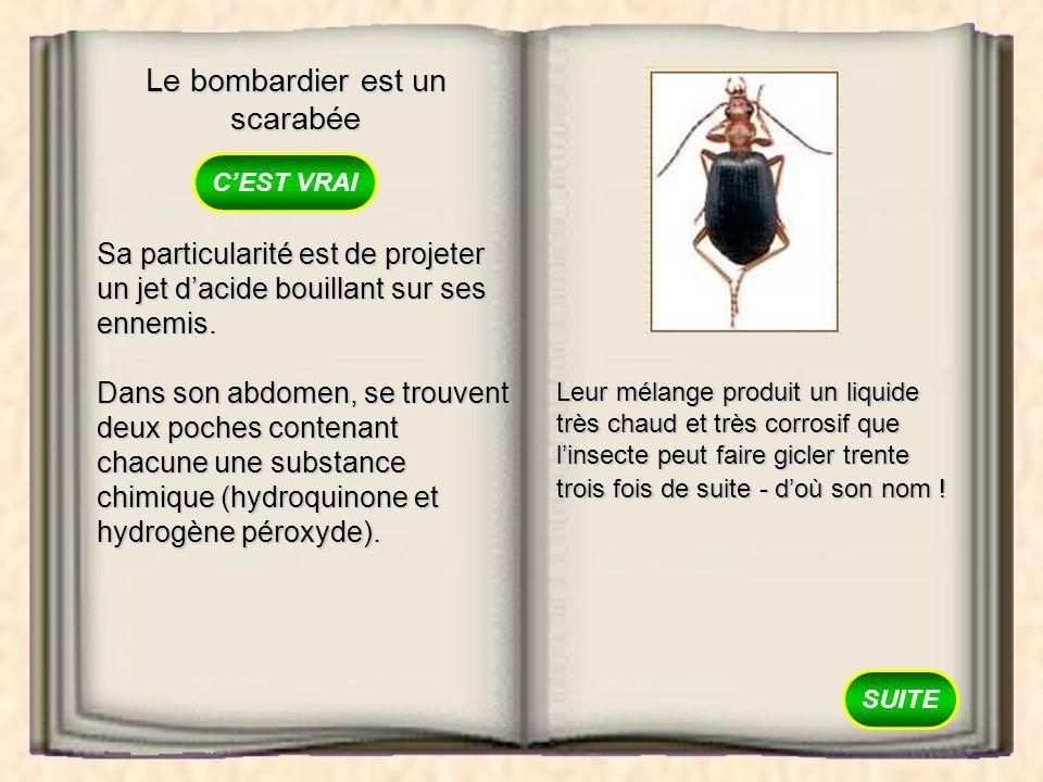 Le bombardier est un scarabée VRAI FAUX