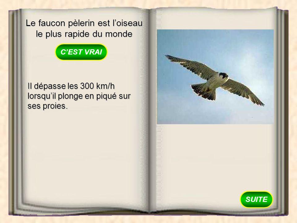 Le faucon pèlerin est loiseau le plus rapide du monde VRAI FAUX