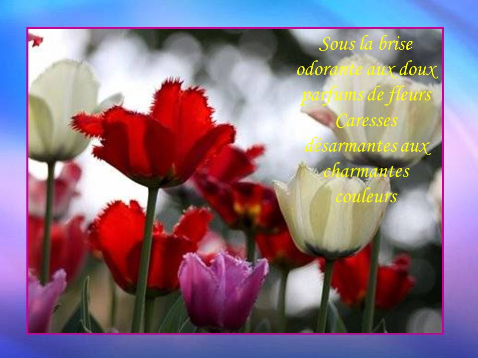 Mon jardin séveillait dans ce joli décor Sous la brise odorante aux doux parfums de fleurs Caresses désarmantes aux charmantes couleurs