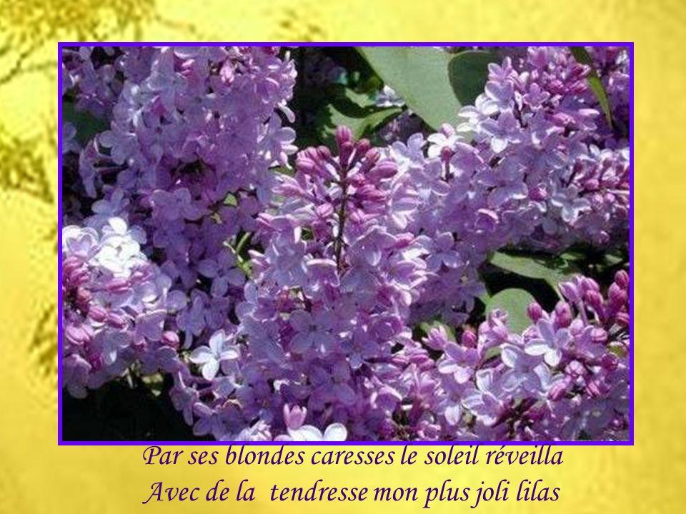 Tout le long du sentier valsent les fleurs sauvages Odeurs de champs mouillés deux saisons font partage