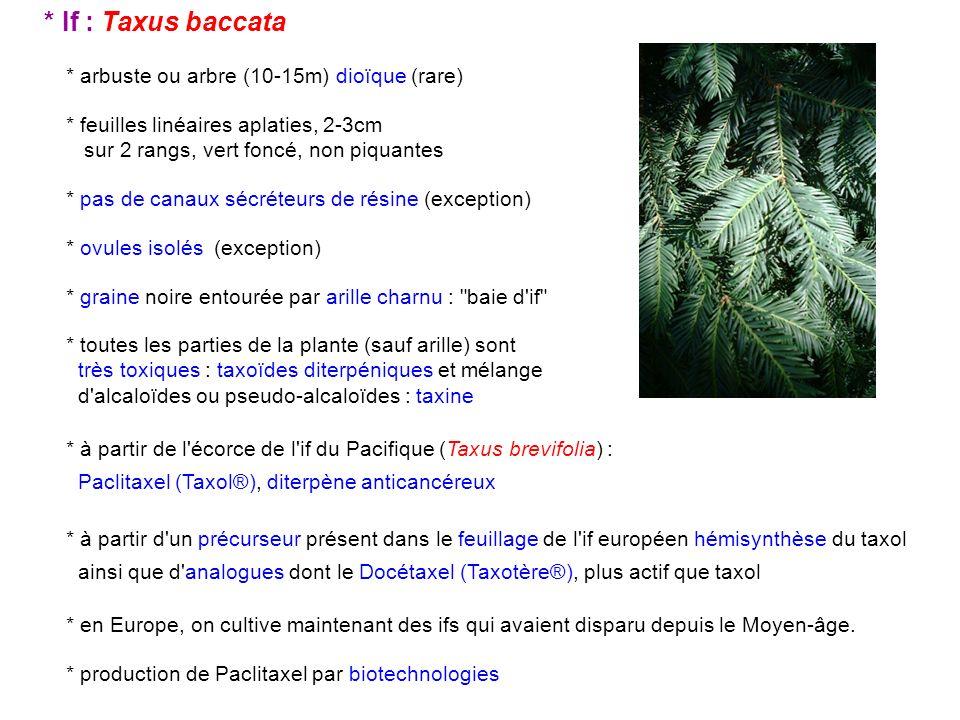* If : Taxus baccata * arbuste ou arbre (10-15m) dioïque (rare) * feuilles linéaires aplaties, 2-3cm sur 2 rangs, vert foncé, non piquantes * pas de canaux sécréteurs de résine (exception) * graine noire entourée par arille charnu : baie d if * ovules isolés (exception) * toutes les parties de la plante (sauf arille) sont très toxiques : taxoïdes diterpéniques et mélange d alcaloïdes ou pseudo-alcaloïdes : taxine * à partir de l écorce de l if du Pacifique (Taxus brevifolia) : Paclitaxel (Taxol®), diterpène anticancéreux * à partir d un précurseur présent dans le feuillage de l if européen hémisynthèse du taxol ainsi que d analogues dont le Docétaxel (Taxotère®), plus actif que taxol * en Europe, on cultive maintenant des ifs qui avaient disparu depuis le Moyen-âge.
