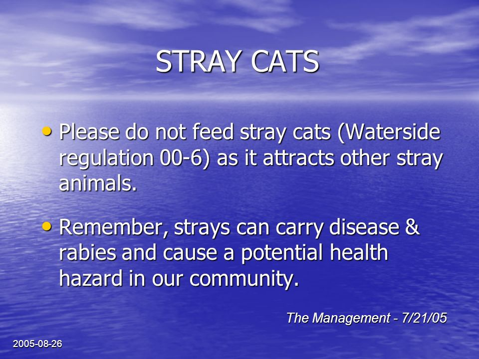 2005-08-26 STRAY CATS Please do not feed stray cats (Waterside regulation 00-6) as it attracts other stray animals. Please do not feed stray cats (Wat
