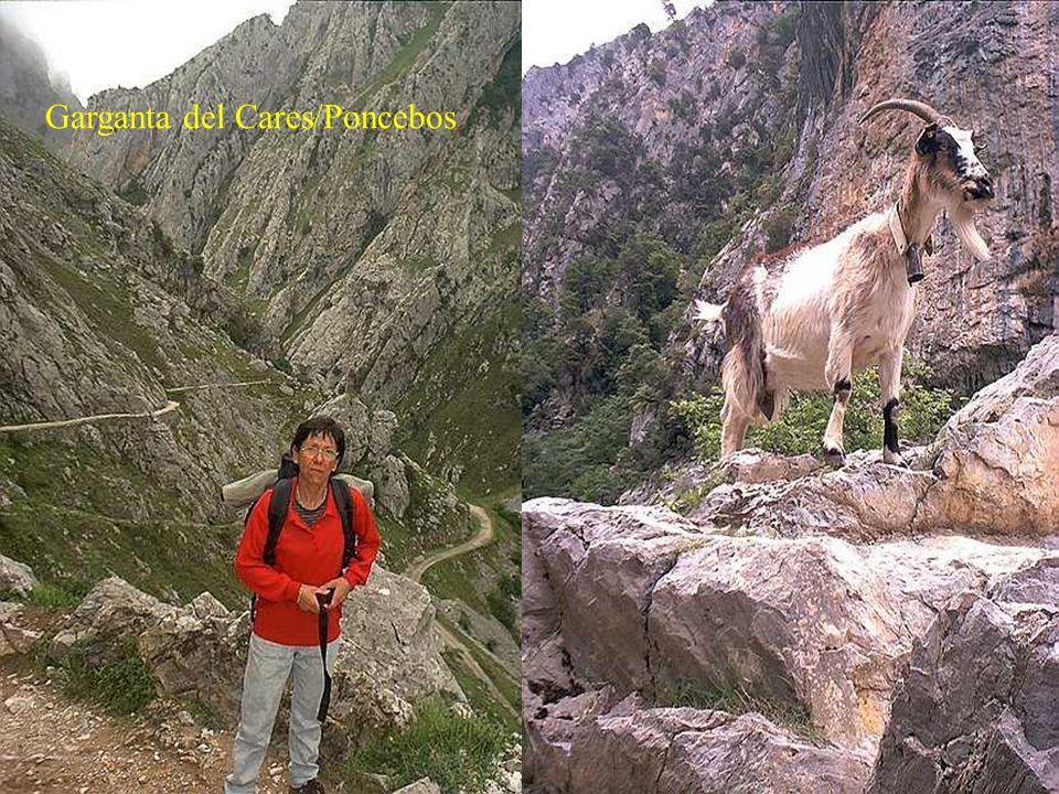 De Arenas de Cabrales, capitale du fromage de Cabrales (semblable au roquefort), une route plonge vers le coeur des Picos de Europa en suivant le cour