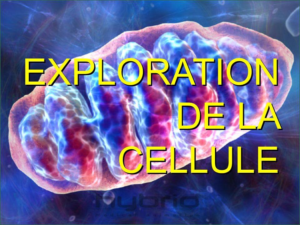 EXPLORATION DE LA CELLULE