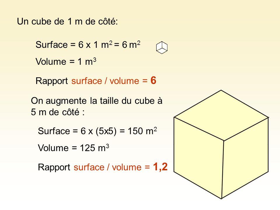 Un cube de 1 m de côté: Surface = 6 x 1 m 2 = 6 m 2 Volume = 1 m 3 Rapport surface / volume = 6 Surface = 6 x (5x5) = 150 m 2 Volume = 125 m 3 Rapport
