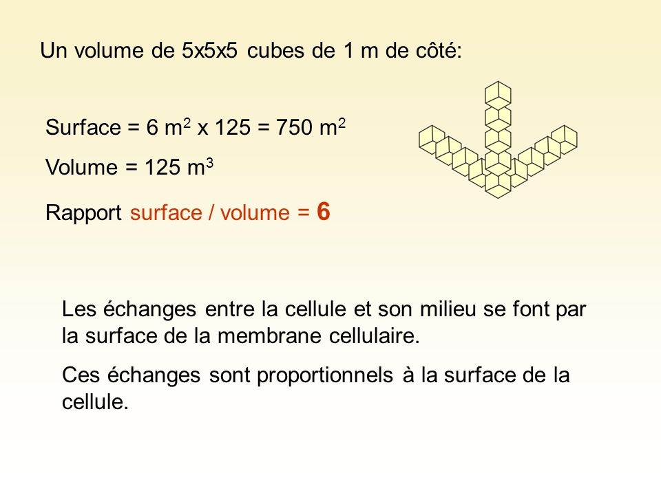 Un volume de 5x5x5 cubes de 1 m de côté: Surface = 6 m 2 x 125 = 750 m 2 Volume = 125 m 3 Rapport surface / volume = 6 Les échanges entre la cellule e