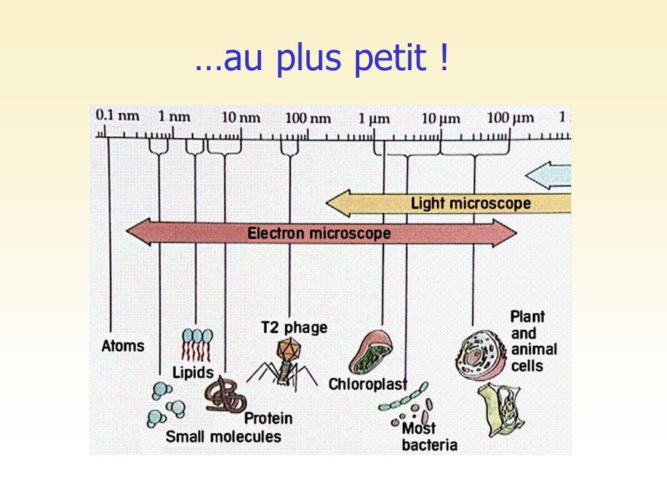 d une à plusieurs milliers par cellule de 1 à 10 m contient de l ADN (!) espace inter-membranaire / matrice mitochondriale chaîne respiratoire => production d ATP Les mitochondries