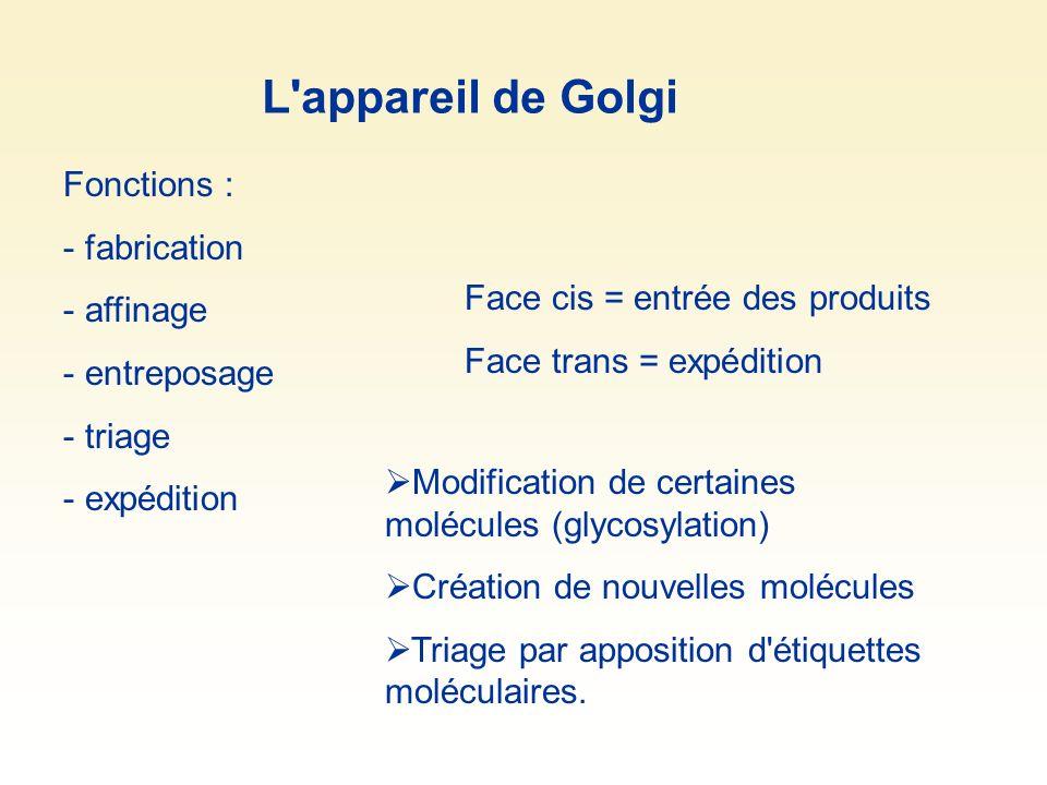 Fonctions : - fabrication - affinage - entreposage - triage - expédition Face cis = entrée des produits Face trans = expédition Modification de certai