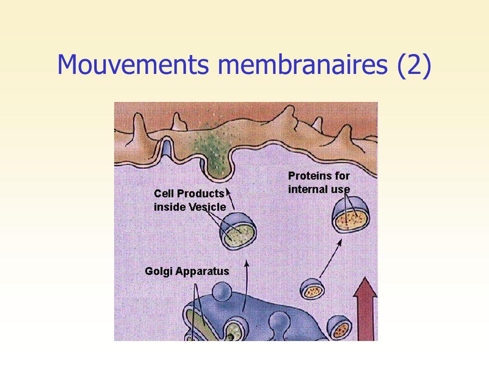 Mouvements membranaires (2)