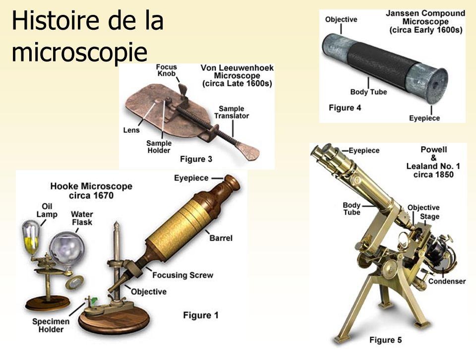 Le premier microscope Robert Hooke 1665 Mince tranche de liège