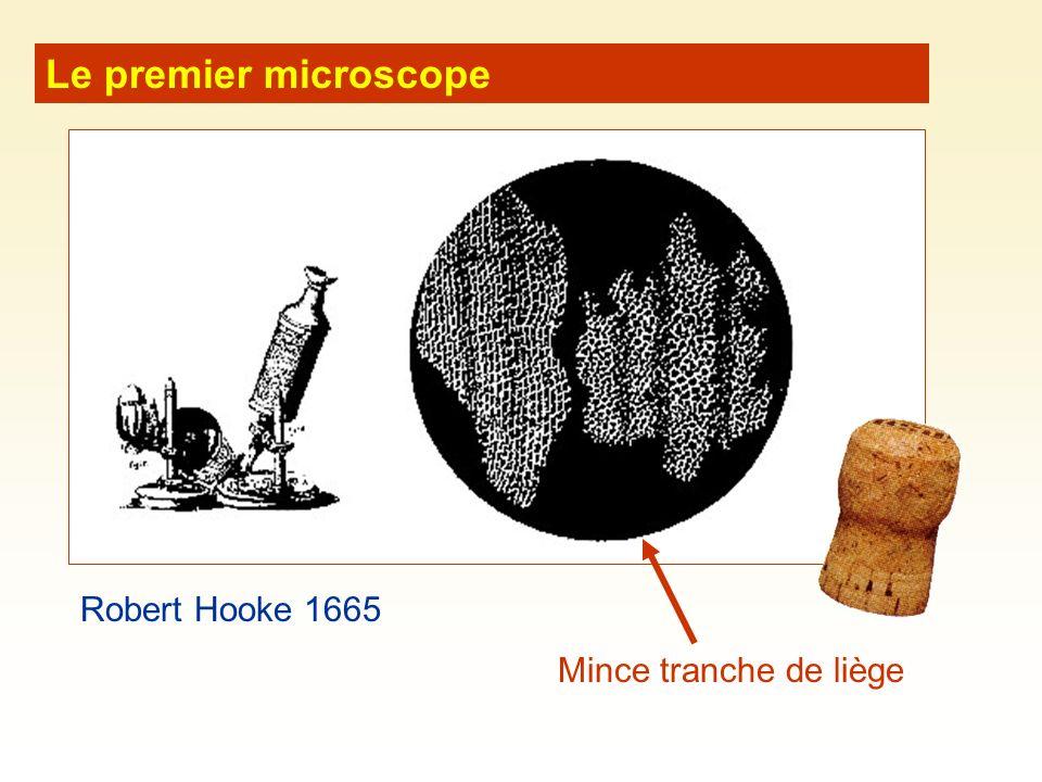 Mouvements membranaires (1)