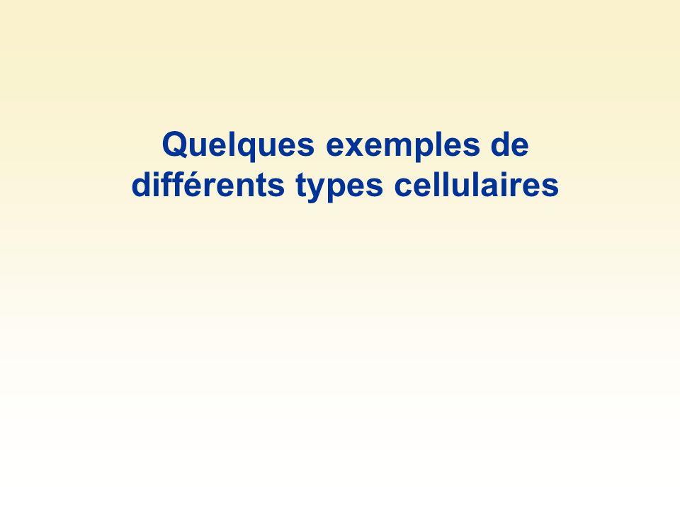Quelques exemples de différents types cellulaires