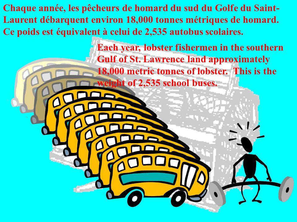 Chaque année, les pêcheurs de homard du sud du Golfe du Saint- Laurent débarquent environ 18,000 tonnes métriques de homard. Ce poids est équivalent à