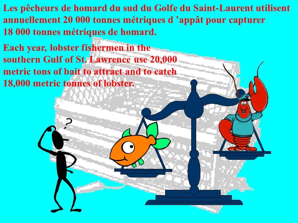 Les pêcheurs de homard du sud du Golfe du Saint-Laurent utilisent annuellement 20 000 tonnes métriques d appât pour capturer 18 000 tonnes métriques d