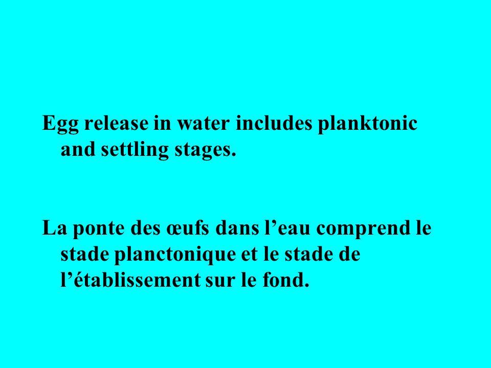 Egg release in water includes planktonic and settling stages. La ponte des œufs dans leau comprend le stade planctonique et le stade de létablissement