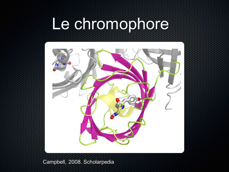 Le chromophore Campbell, 2008. Scholarpedia