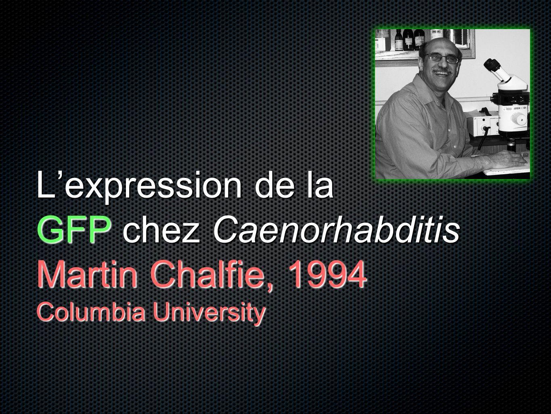 Lexpression de la GFP chez Caenorhabditis Martin Chalfie, 1994 Columbia University