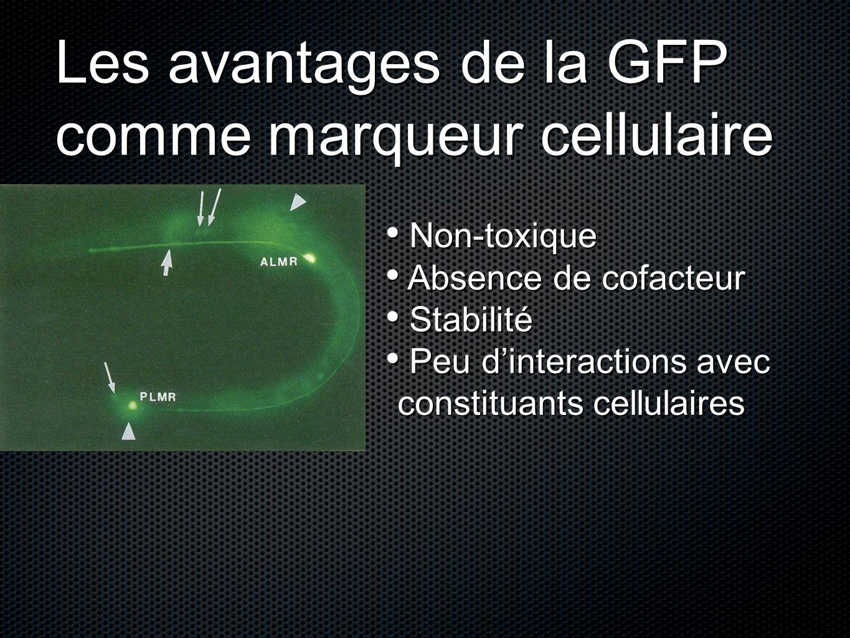Les avantages de la GFP comme marqueur cellulaire Non-toxique Non-toxique Absence de cofacteur Absence de cofacteur Stabilité Stabilité Peu dinteracti