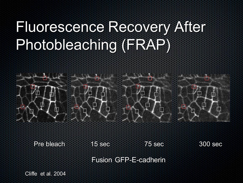 Fusion GFP-E-cadherin Pre bleach 15 sec 75 sec 300 sec Fluorescence Recovery After Photobleaching (FRAP) Cliffe et al. 2004