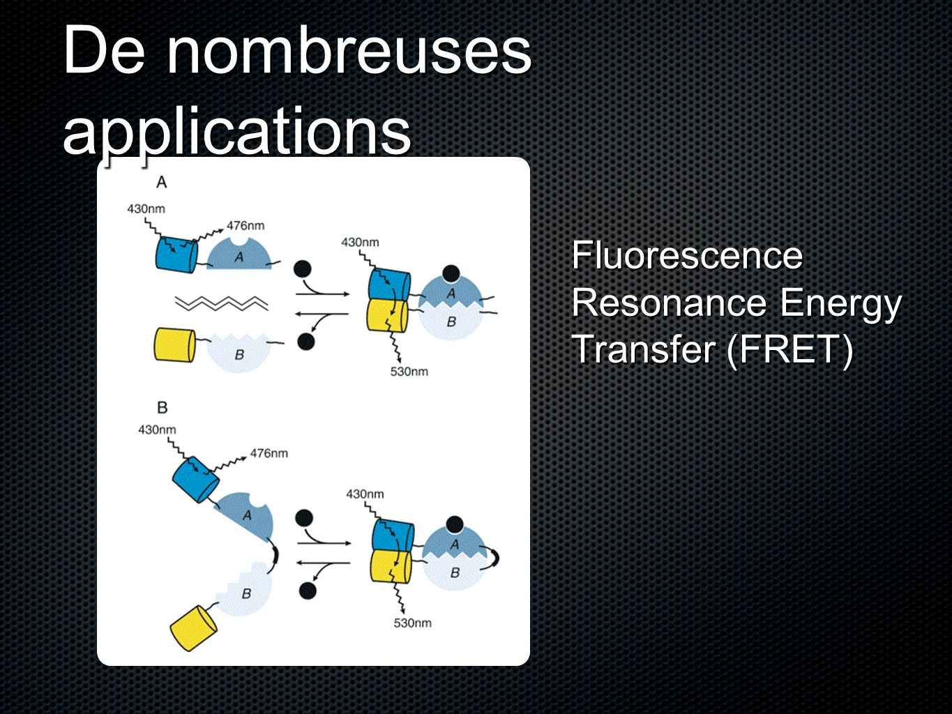 De nombreuses applications Fluorescence Resonance Energy Transfer (FRET)