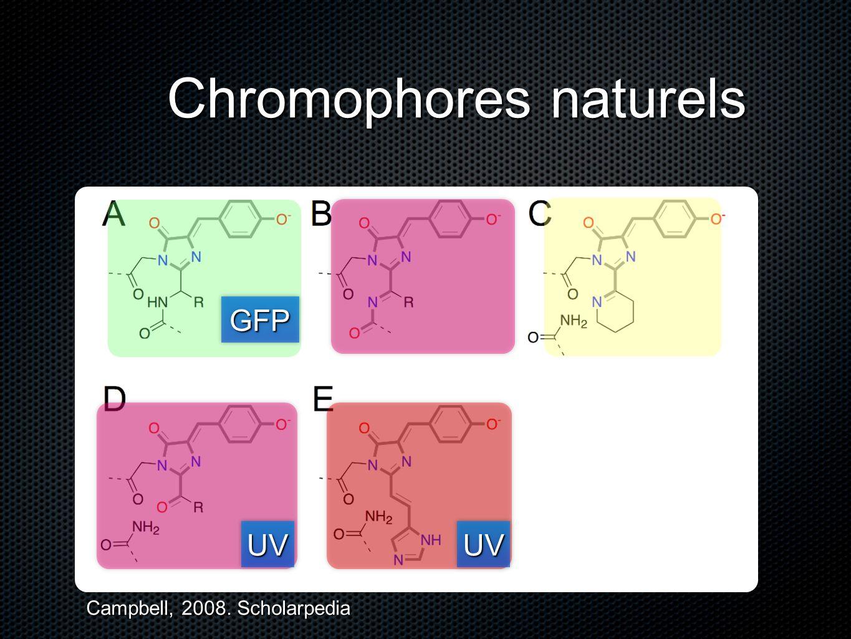 Chromophores naturels UVUVUVUV GFPGFP Campbell, 2008. Scholarpedia