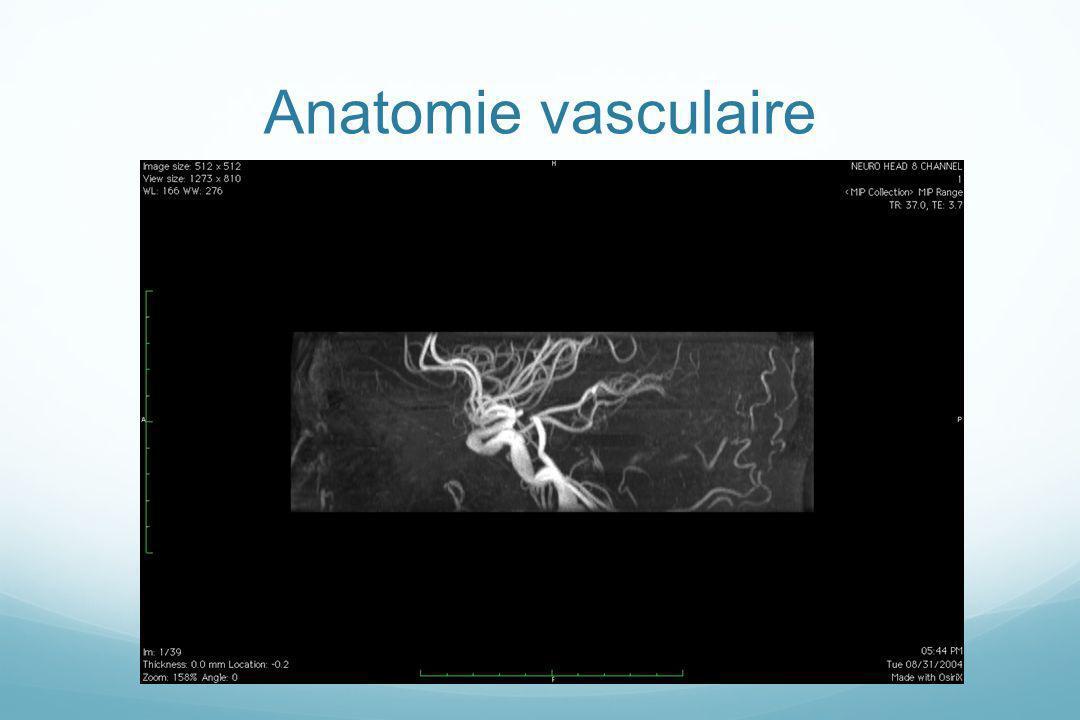 Anatomie vasculaire