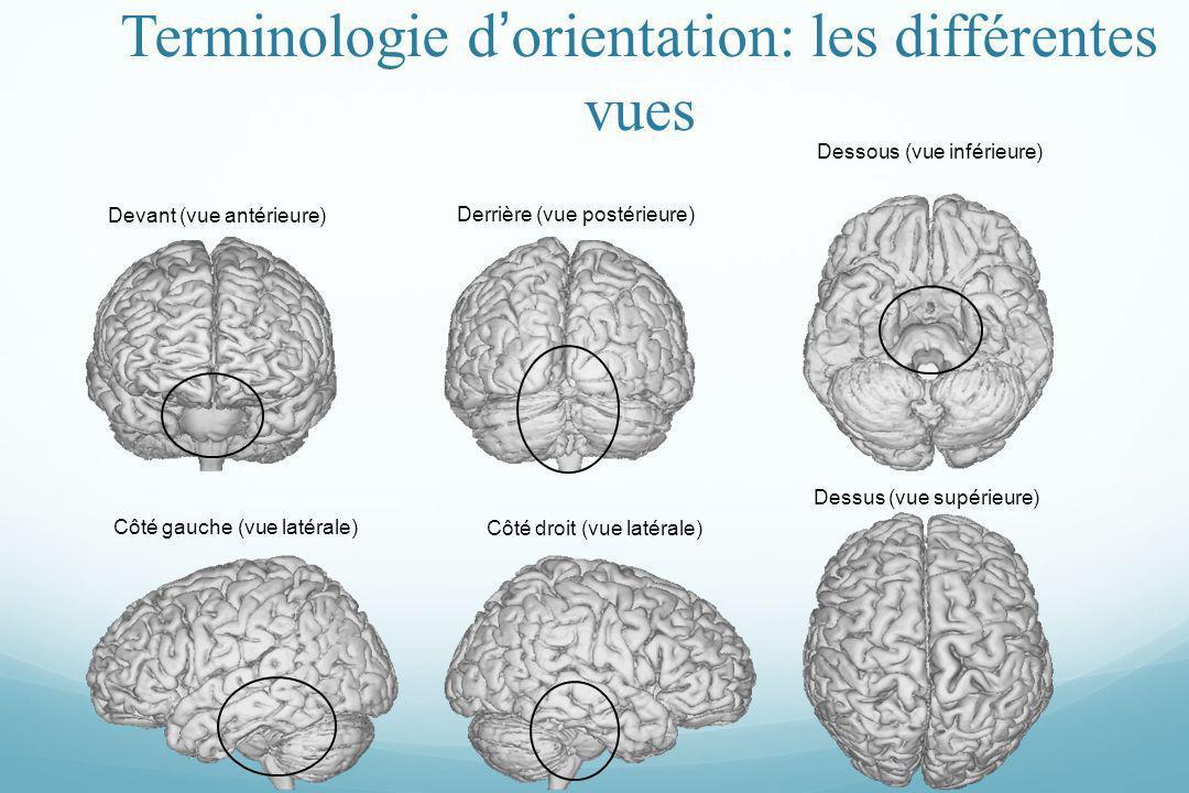 Devant (vue antérieure) Derrière (vue postérieure) Dessous (vue inférieure) Côté gauche (vue latérale) Côté droit (vue latérale) Dessus (vue supérieur