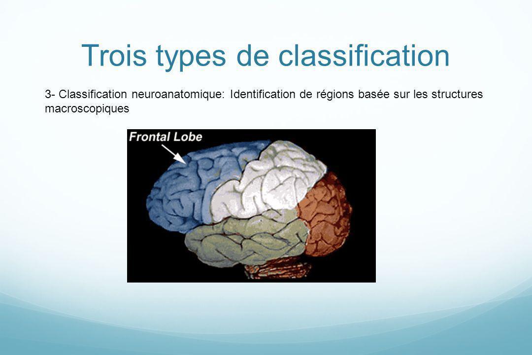 3- Classification neuroanatomique: Identification de régions basée sur les structures macroscopiques Trois types de classification