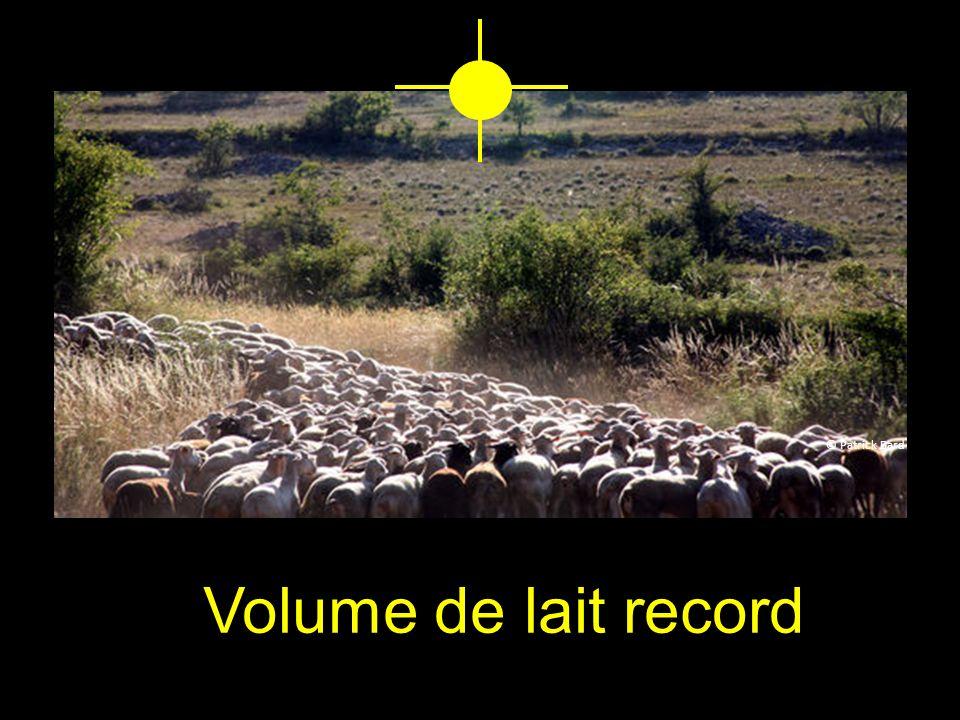 Volume de lait record © Patrick Bard