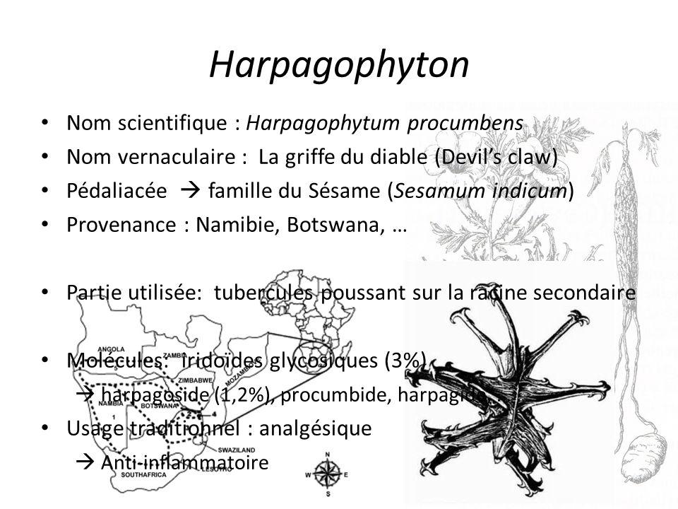 Harpagophyton Nom scientifique : Harpagophytum procumbens Nom vernaculaire : La griffe du diable (Devils claw) Pédaliacée famille du Sésame (Sesamum indicum) Provenance : Namibie, Botswana, … Partie utilisée: tubercules poussant sur la racine secondaire Molécules: iridoïdes glycosiques (3%) harpagoside (1,2%), procumbide, harpagide, … Usage traditionnel : analgésique Anti-inflammatoire