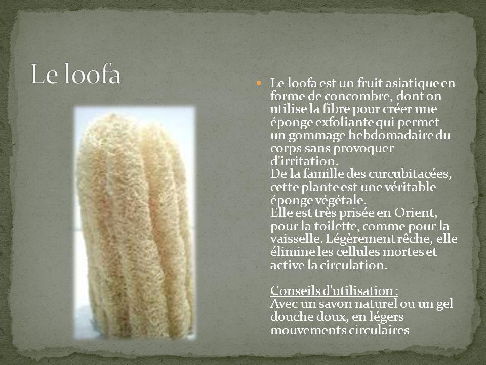 Le loofa est un fruit asiatique en forme de concombre, dont on utilise la fibre pour créer une éponge exfoliante qui permet un gommage hebdomadaire du