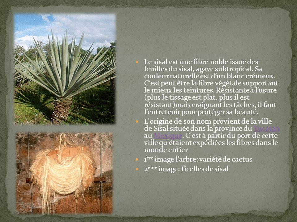 Le sisal est une fibre noble issue des feuilles du sisal, agave subtropical. Sa couleur naturelle est dun blanc crémeux. Cest peut être la fibre végét