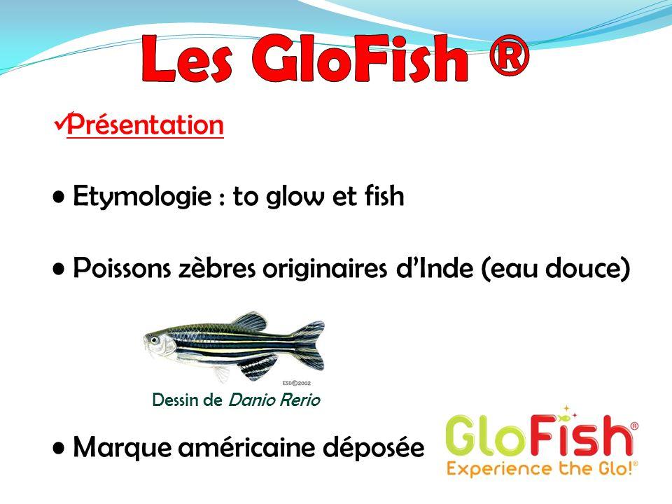 Présentation Etymologie : to glow et fish Poissons zèbres originaires dInde (eau douce) Marque américaine déposée Dessin de Danio Rerio