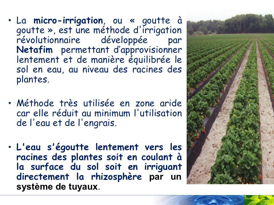 La micro-irrigation, ou « goutte à goutte », est une méthode d'irrigation révolutionnaire développée par Netafim permettant dapprovisionner lentement