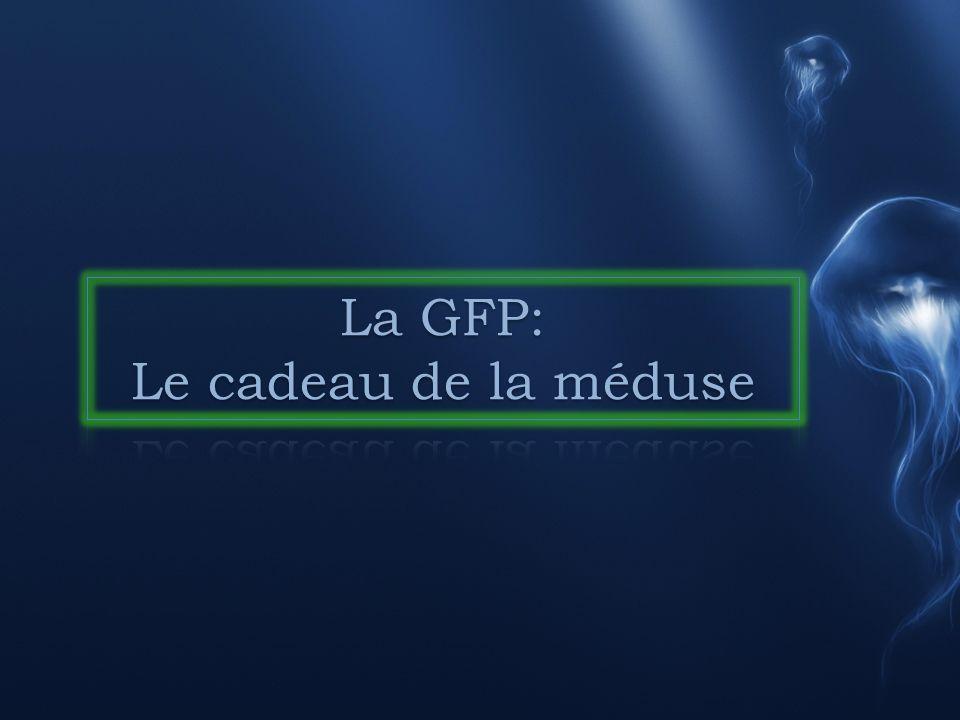 I.Les premières avancées sur la GFP (in vivo) A.La découverte dun chercheur B.