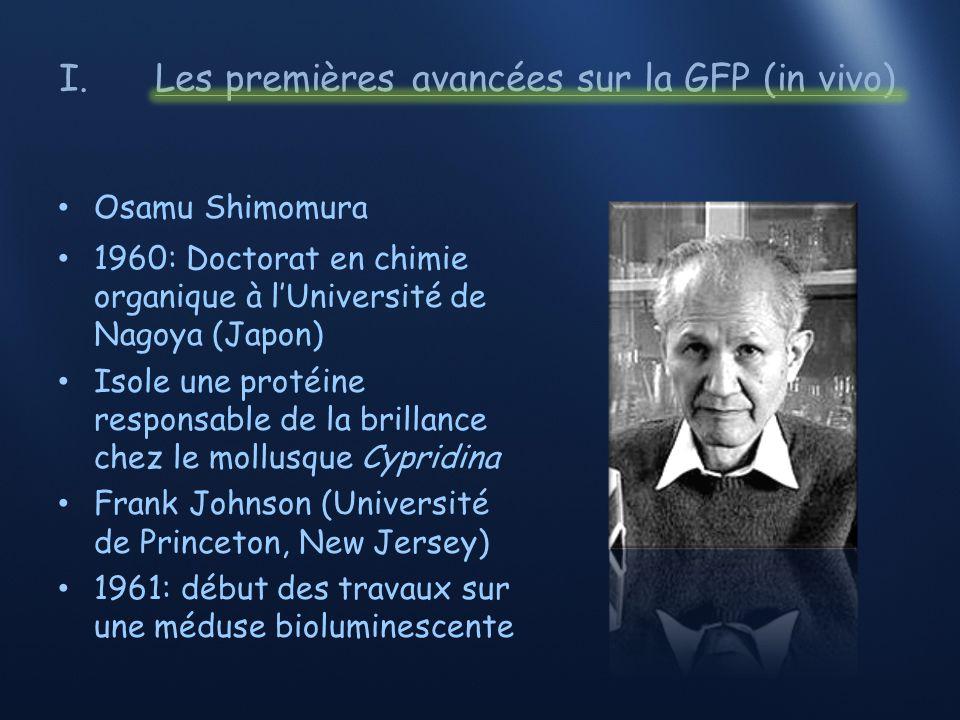 I.Les premières avancées sur la GFP (in vivo) Aequorea victoria (« cristal jelly ») Côtes du Nord-Ouest du Pacifique Organisme bioluminescent Particularité: émission dune lumière verte à la base de lombrelle (anneau) Travail sur 10 000 spécimens