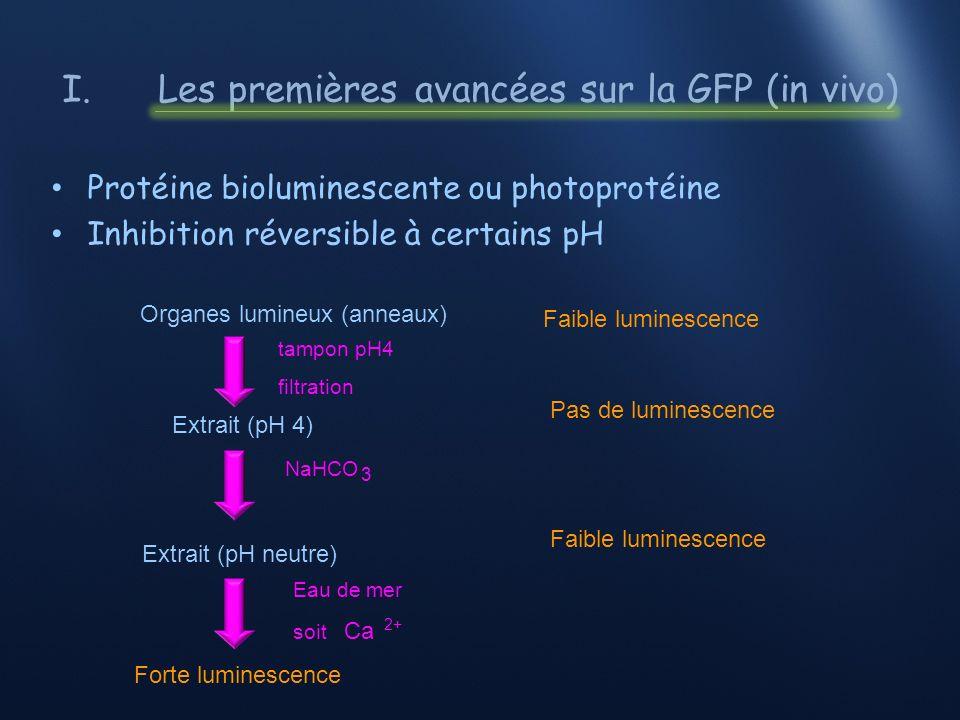 I.Les premières avancées sur la GFP (in vivo) 1962: extraction de 2 protéines Aequorine: 465 nm - apo-aequorine (189 aa, 21KDa) - O moléculaire - chromophore « coelenterazine » (423Da) GFP 508 nm Pourquoi la méduse ne sirradie que de vert.