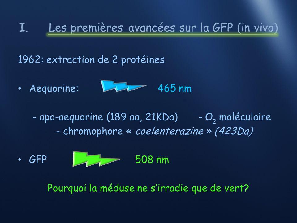 I.Les premières avancées sur la GFP (in vivo) 1969: aequorine AF-350 (coelenteramine) 1972: Dénaturation (urée + 2-mercaptoéthanol) 2-aminopyrazine (Cypridina)