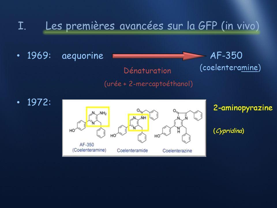 O2O2 O2O2 O2O2 I.Découverte de la GFP et sa fluorescence * Ca 2+ O2O2 Aequorine (coelenterazine) Aequorine CO 2 GFP 2X Aequorine (coelenteramide) Apoaequorine