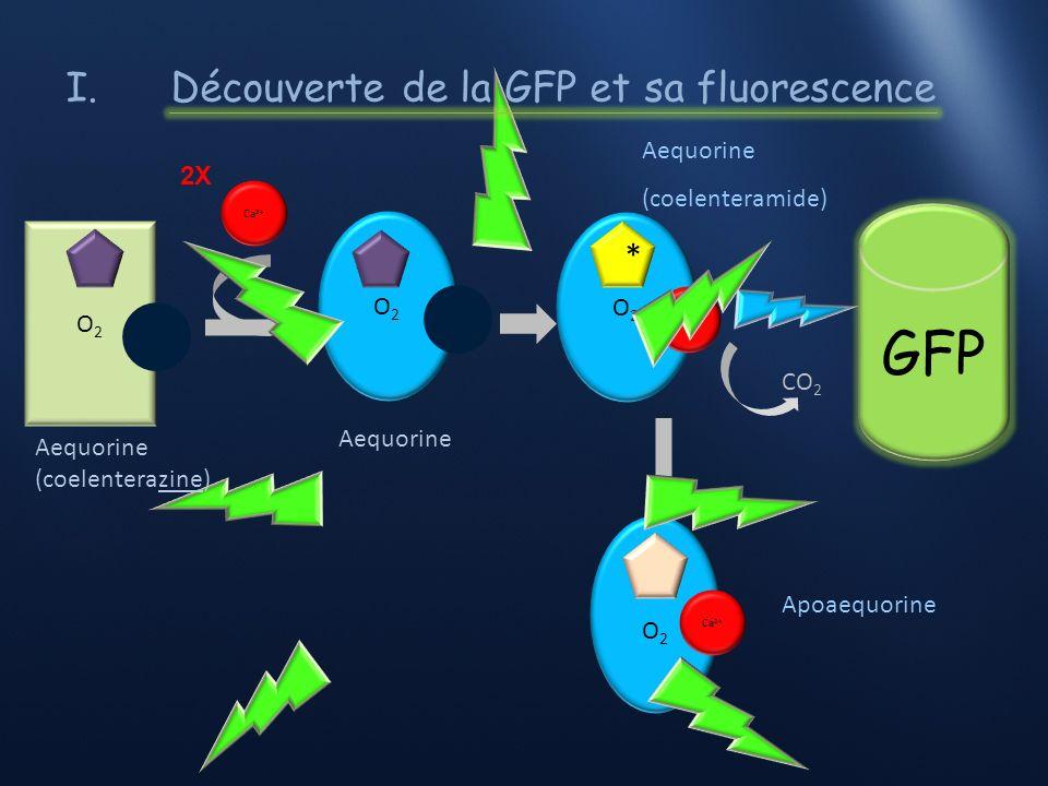I.Les premières avancées sur la GFP (in vivo) GFP: réaction de fluorescence 1979: découverte du chromophore de la GFP et de sa structure 10 décembre 2008: Prix Nobel de Chimie