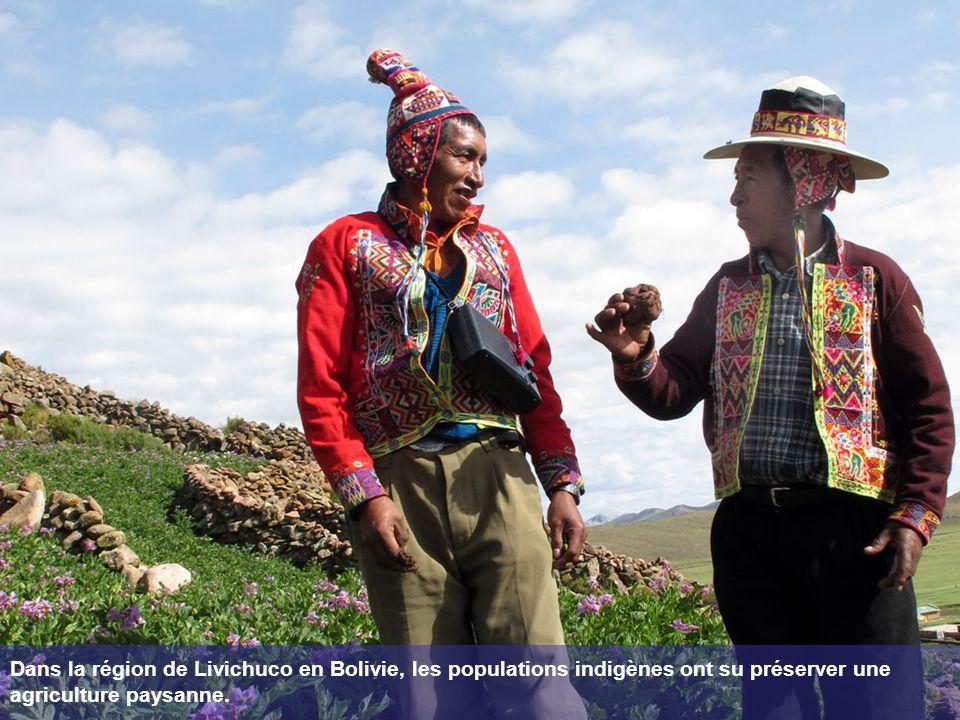 Dans la région de Livichuco en Bolivie, les populations indigènes ont su préserver une agriculture paysanne.