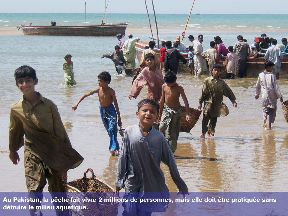 Au Pakistan, la pêche fait vivre 2 millions de personnes, mais elle doit être pratiquée sans détruire le milieu aquatique.