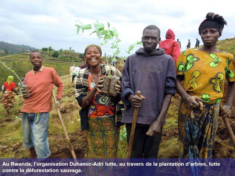 Au Rwanda, lorganisation Duhamic-Adri lutte, au travers de la plantation darbres, lutte contre la déforestation sauvage.